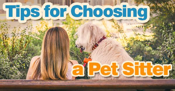 Tips for Choosing a Pet Sitter